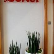 interier-kvetinova-vyzdoba-rosmarino-kvetinovy-atelier-11
