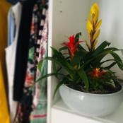 interier-kvetinova-vyzdoba-rosmarino-kvetinovy-atelier-31