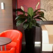 interier-kvetinova-vyzdoba-rosmarino-kvetinovy-atelier-4