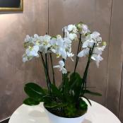 interier-kvetinova-vyzdoba-rosmarino-kvetinovy-atelier-44