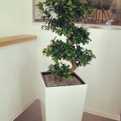 interier-kvetinova-vyzdoba-rosmarino-kvetinovy-atelier-sada-1-2